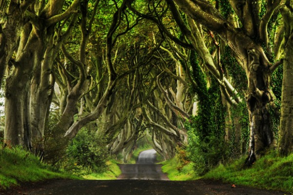 The Dark Hedges il mondo fantasy reale